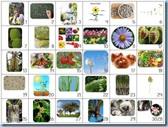 Calendar Connections Small Botany