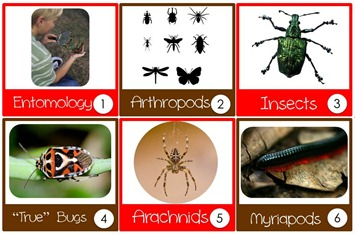 Bugs Calendar Cards