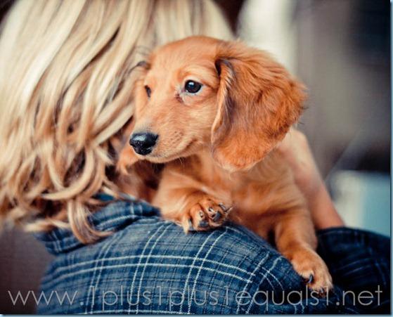 New Puppy-2656
