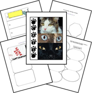 cats_lapbook_complete