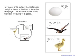 Goose Life Cycle