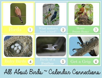 All About Birds Calendar Connections[8]