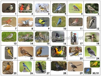 Calendar Connections Backyard Birds K-2 SMALL