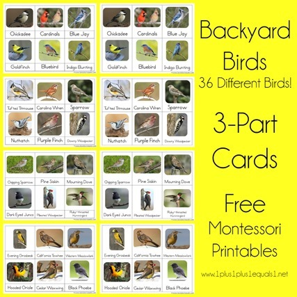 Backyard Birds Montessori Printables