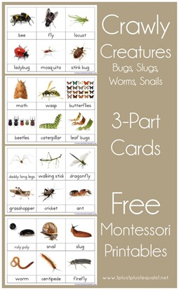 Montessori-Nomenclature-Printables