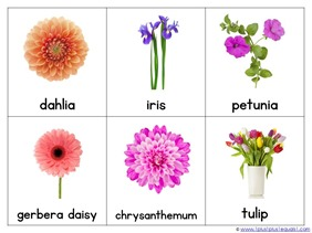 Flower Nomenclature