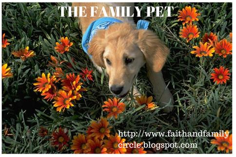 Faith and Family Circle