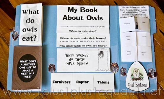 Owl Lapbook -8828