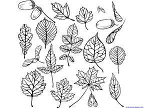 Fall Leaves and Trees Coloring  (16)