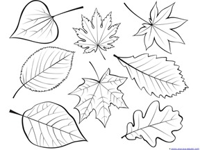 Fall Leaves and Trees Coloring  (17)