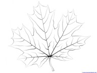 Fall Leaves and Trees Coloring  (8)