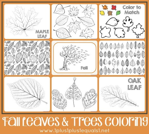 Fall Leaves and Trees Coloring Pages