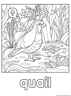 Q is for Quail Coloring Page
