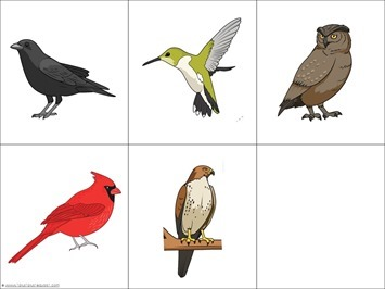 Trace and Color Birds (2)
