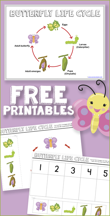 Free Butterfly Life Cycle Printables