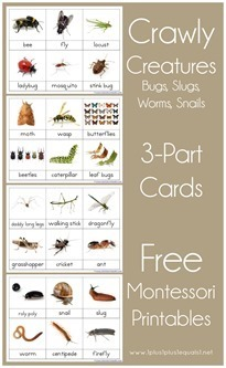 Montessori-Nomenclature-Printables-3[1][2]