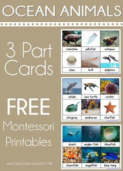 Ocean Animals Montessori Printables Nomenclature 3 Part Cards