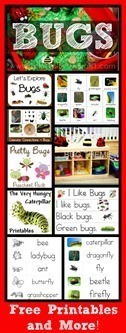 Bug-Theme-Collection622