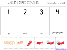 Ant Life Cycle Printables