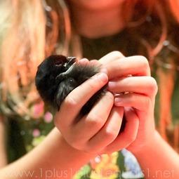 Chicks 3.19.18_