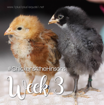 Chickens 4 the Hinsons Week 3[3]