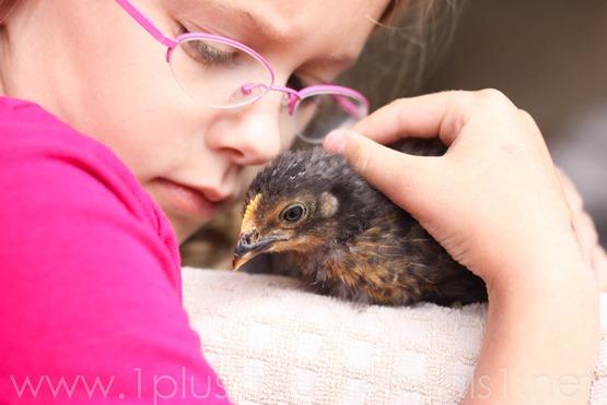 Chicks week 3-8