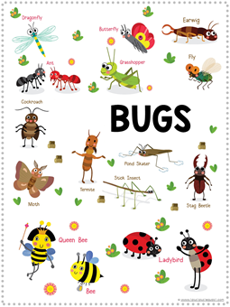 Bug Fun Pack (2)