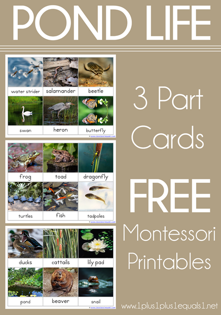 Pond Life 3 Part Cards Montessori Nomenclature Free Printables