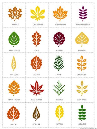 Peek and Find Leaves (1)