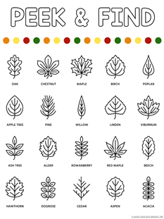 Peek and Find Leaves (2)