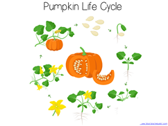 Pumpkin Kindergarten Literature Unit Printables (13)