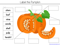 Pumpkin Kindergarten Literature Unit Printables (14)