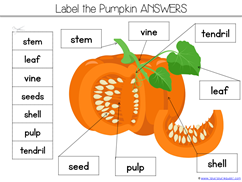 Pumpkin Kindergarten Literature Unit Printables (15)