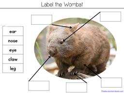Wombat Divine Kindergarten Literature Unit (18)