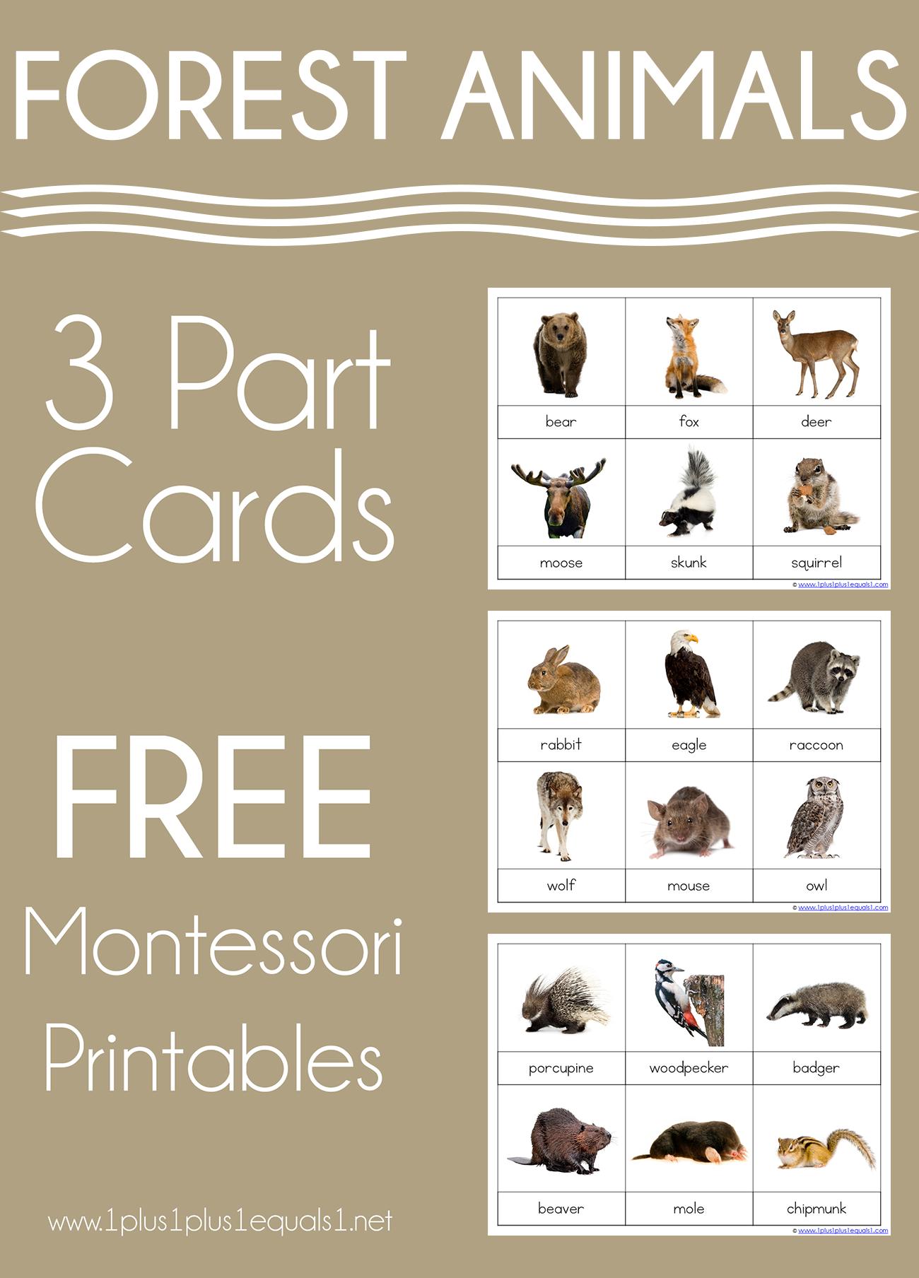 Forest Animals Montessori Printables Free 3 Part Cards 1 1 1 1